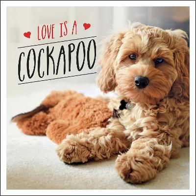 Love is a Cockapoo